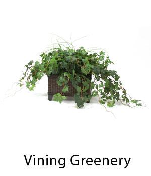 Vining Greenery
