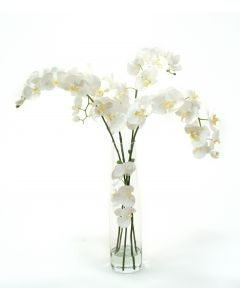 Waterlook® White Phaleanopsis Orchids in Clear inverted Glass Cylinder