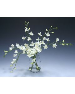 Waterlook® White Dendrobium Orchid in Angled Glass Vase