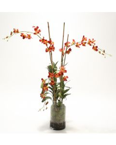 Waterlook® Rust Dendrobium Orchid Plant with Moss in Glass Cylinder