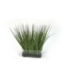 Grass with Rock in Oval Glass