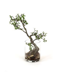 Bonsai Tree in Clear Cylinder Vase