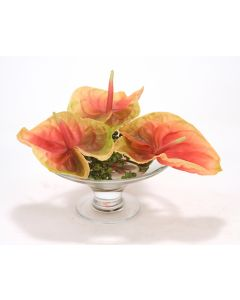 Waterlook® Coral Green Antheriums in Glass Compote