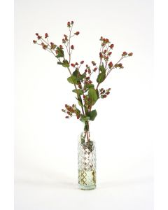 Green Brown Hypericum Berries in Anise Bottle (Packed 1)