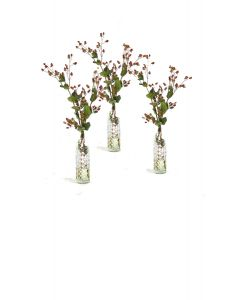 GREEN BROWN HYPERICUM BERRIES IN ANISE BOTTLE (Set of 3)