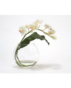 Waterlook® White Cymbidium Orchid with Tropical Leaf in Disk Vase