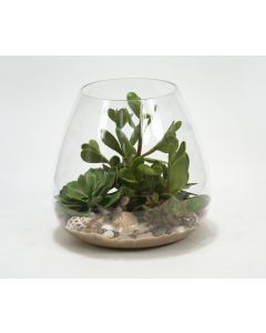 Waterlook® Succulents With Sand And Shells In Glass Bowl