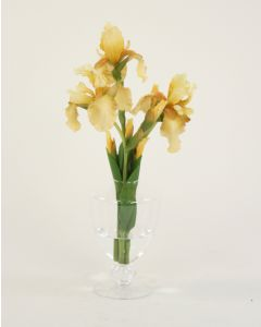 Waterlook® Light Yellow Bearded Iris in Footed Glass Vase
