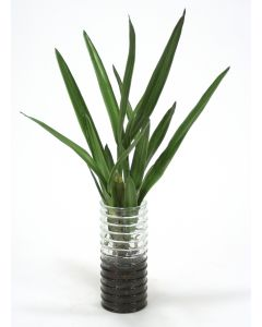 Orchid Plants Ngrn Glass