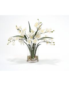 Waterlook® Cream Phalaenopsis Orchids and Foliage in Narrow Oval Glass Vase