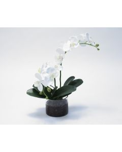Waterlook&Reg; White Phaleanopsis Orchid in Clear Glass Cylinder