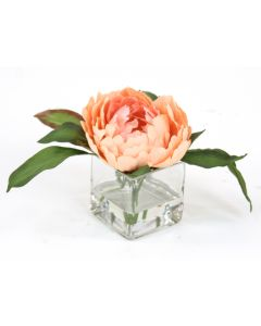 Waterlook® Peach Peony in Square Glass (Sold in Multiples of 3)
