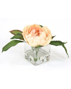 Waterlook® Antique Peach Peony in Square Glass (Sold in Multiples of 3)