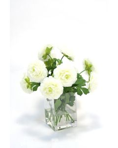 Cream White Ranunculus in Square Vase