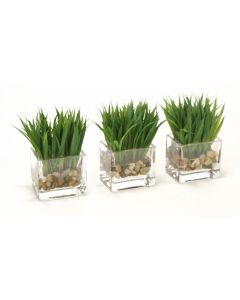 Waterlook® Grass in Glass Square Cube (Set of 3)