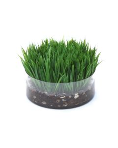 Waterlook® Grass with Bark in Low Clear Glass Bowl