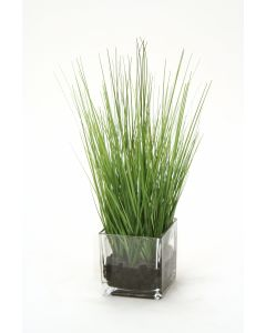Waterlook® Two Tone Green Grass in Square Glass Cube