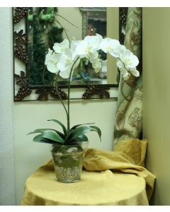 Waterlook® Cream White Phaleanopsis Orchid with Whip Grass in Glass Flower Pot Vase