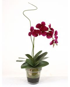 Violet Phaleanopsis Orchid with Whip Grass in Glass Flower Pot Vase