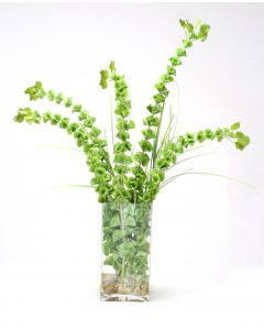 Waterlook® Belles of Ireland and Grass in Rectangle Glass Vase