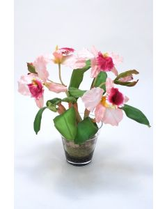 Waterlook® Sonia Cattleya Orchid Plant In Glass Flower Pot Vase
