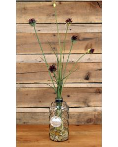 Waterlook&Reg; Red Roses in Clear Glass Vase