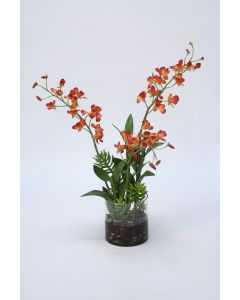 Waterlook®  Rust Dendrobium Orchids in Cylinder