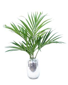 Kentia Palm in Silver Hobnail Vase