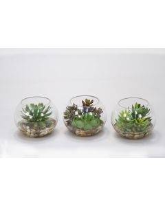 Succulents in Small Round Glass