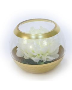 White Peony Floating in Gold Circled Glass