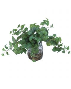Hedera Ivy in Wire Jar