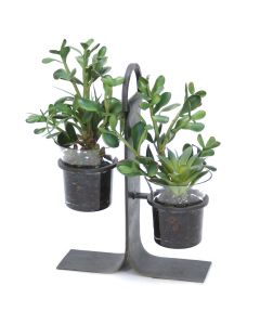 Succulent Garden in Glass with Iron Holder