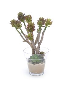 Succulent Tree in Glass Flower Pot
