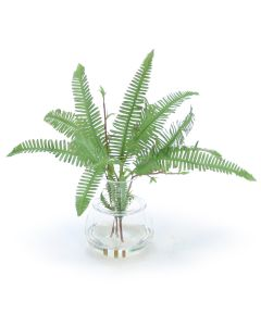 Mini Fern in Glass Vase with Rim