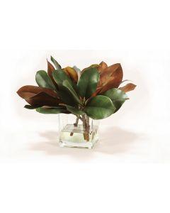 Magnolia Foliage in Glass