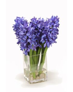 Blue Hyacinths in Square Vase