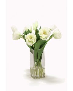 Cream Green Parrot Tulips in Square Vase