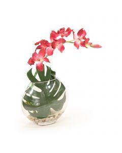 Burgundy Orchid in Disk Vase