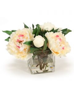 Cream Peony in Square Glass