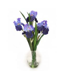 Blue Violet Iris in Glass Vase