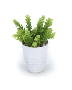 Sedum Succulents in White Artsi Pot (Min Pack 2)