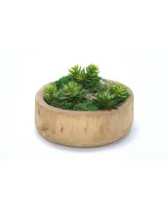 Succulents and Moss in Round Wooden Bowl