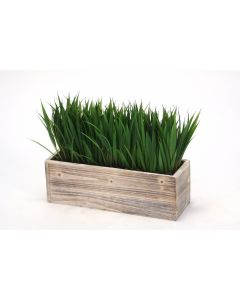 Grass in A Wooden White Washed Rectangular Box