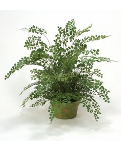 "Maiden Hair Fern in 8"" Olive Pot"
