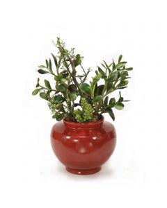 Succulents in Rust Red Vase