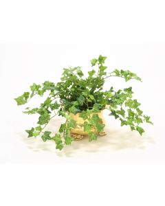 Mini Ivy in Footed Brass Pot (Min Pack of 3)
