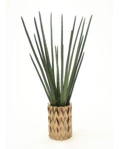 Sanseveria in Zig Zag Earthenware Vase