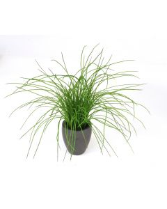 Green Grass in Matte Black Metallic Planter
