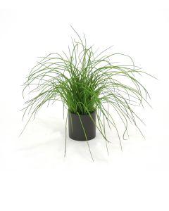 Green Grass in Matte Black Circle Planter