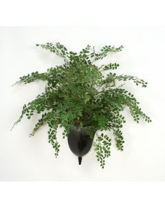 Maiden Hair Fern in Bronze Metal Wall Planter